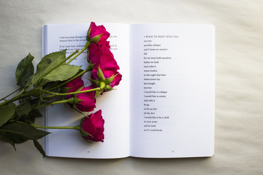 red roses on book