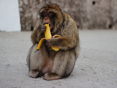 Monkeys infected with COVID-19 develop immunity in studies, a positive sign for vaccines