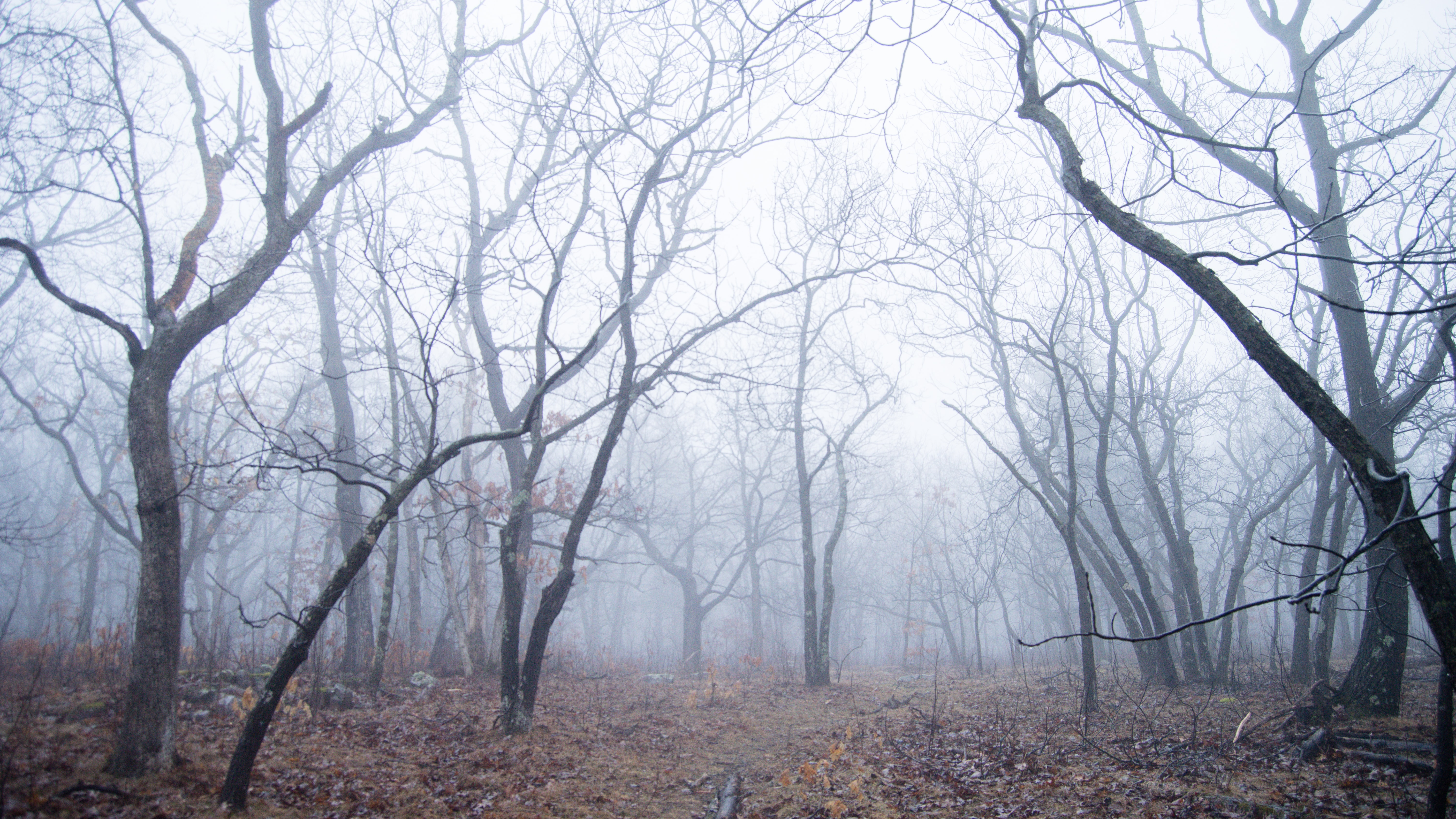 bare forest during foggy day