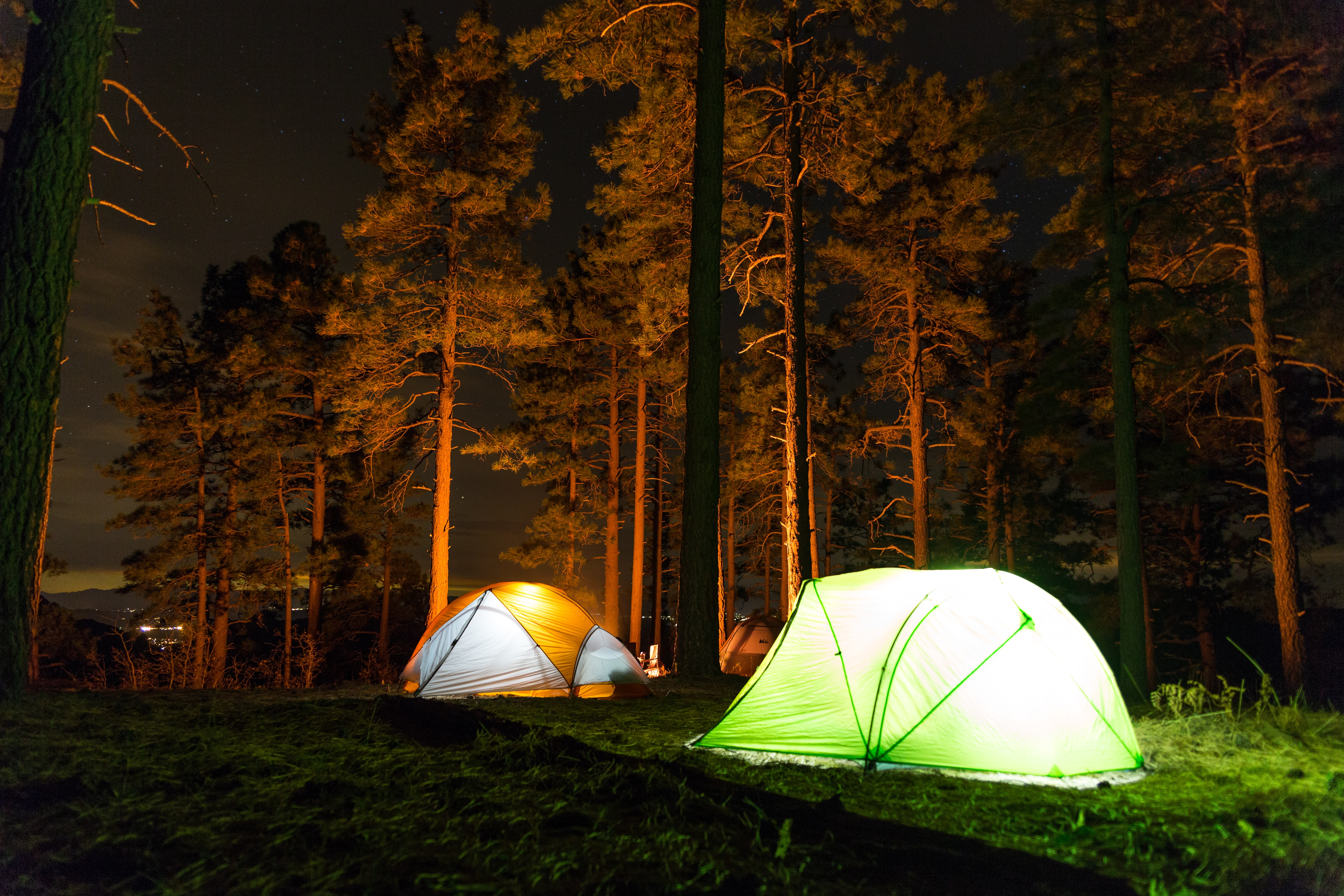green and orange tent in the forest