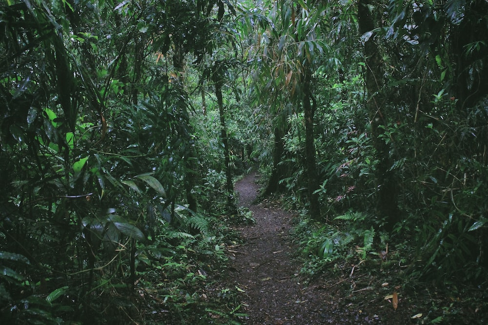 pathway surrounded green plants and trees
