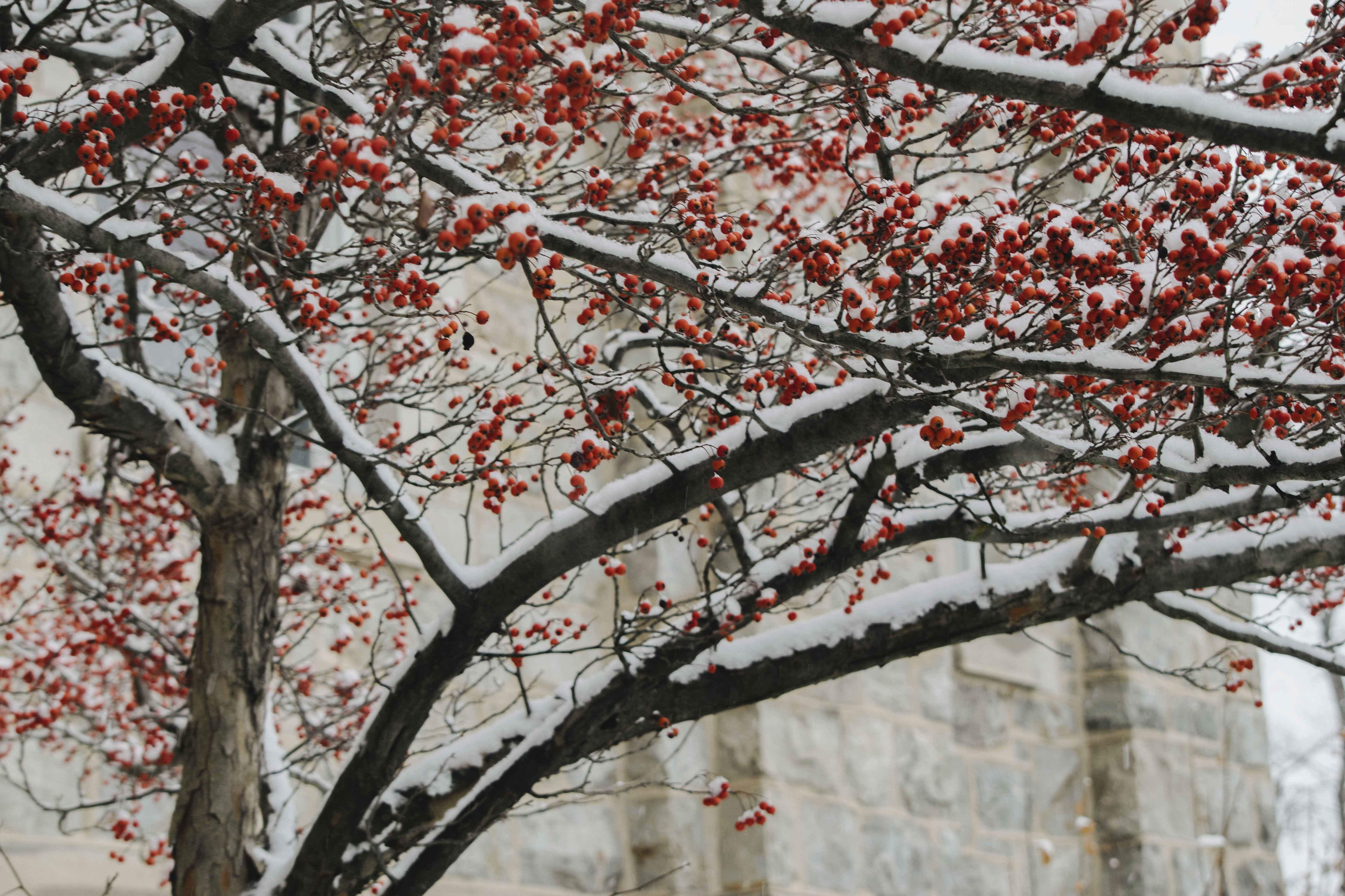 red tree in shallow focus photography