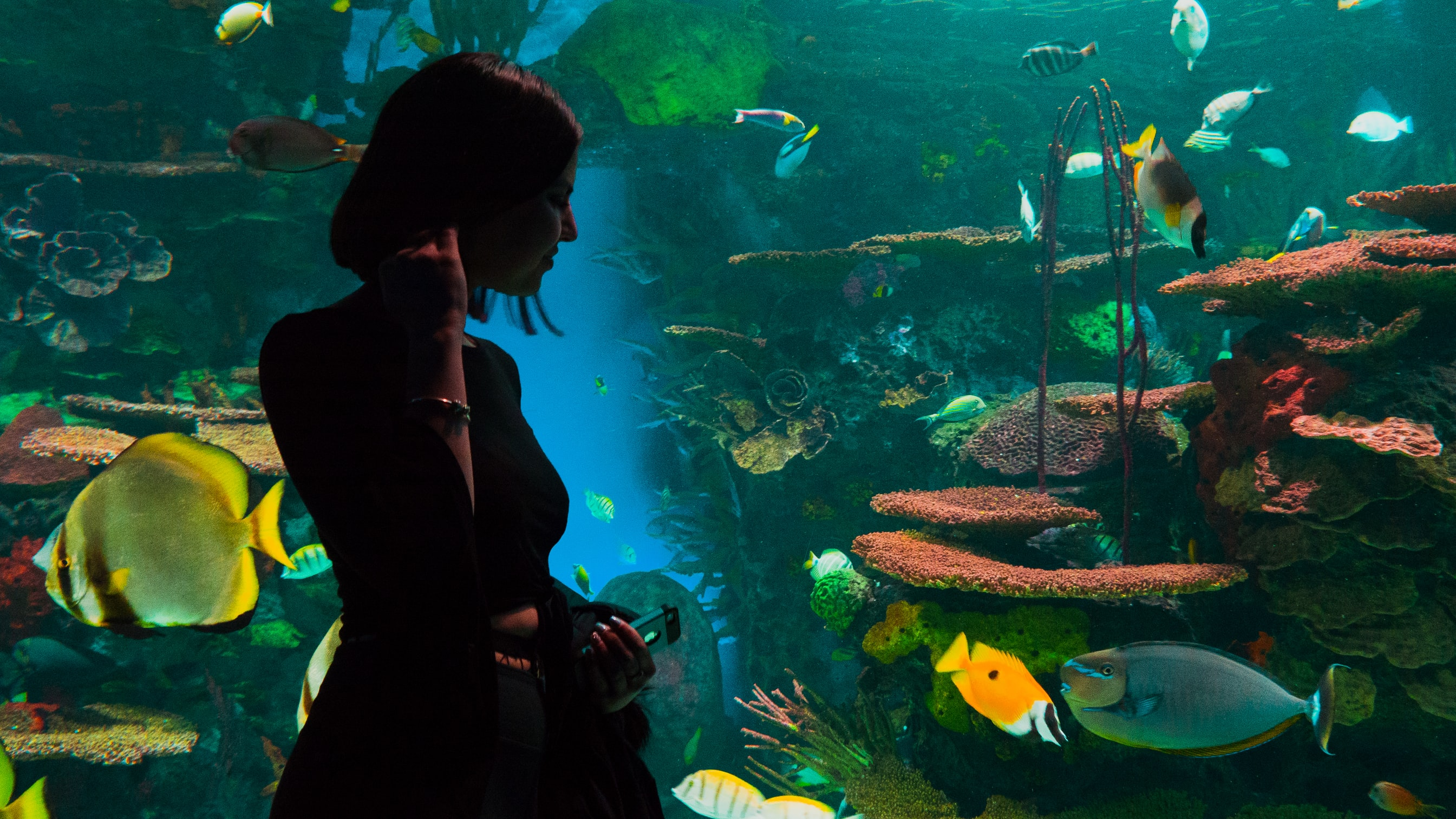 A lady watching fishes at an aquarium