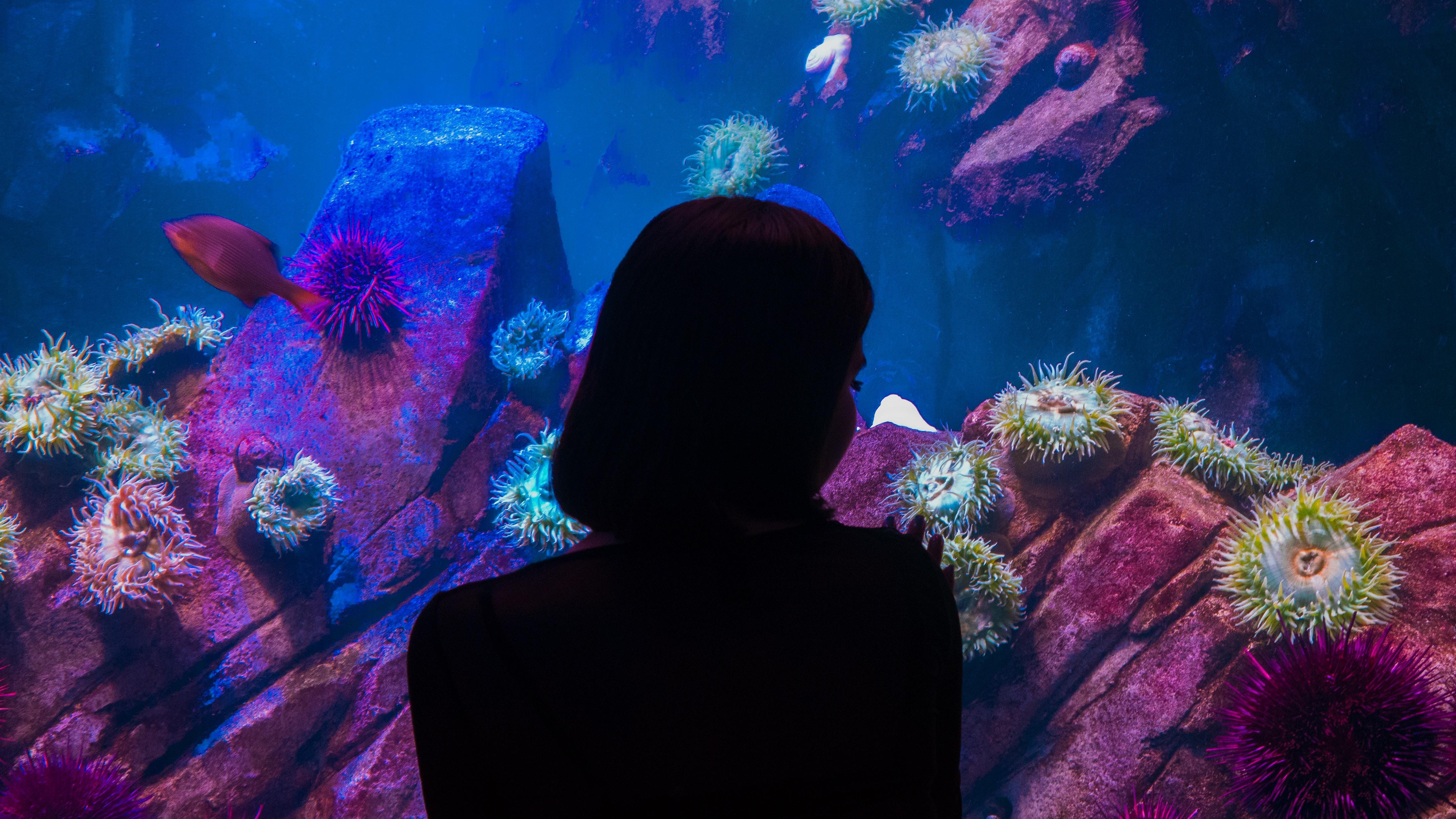 woman near aquarium shadow photography
