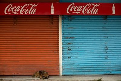 tan dog lying near red and blue metal door shutters
