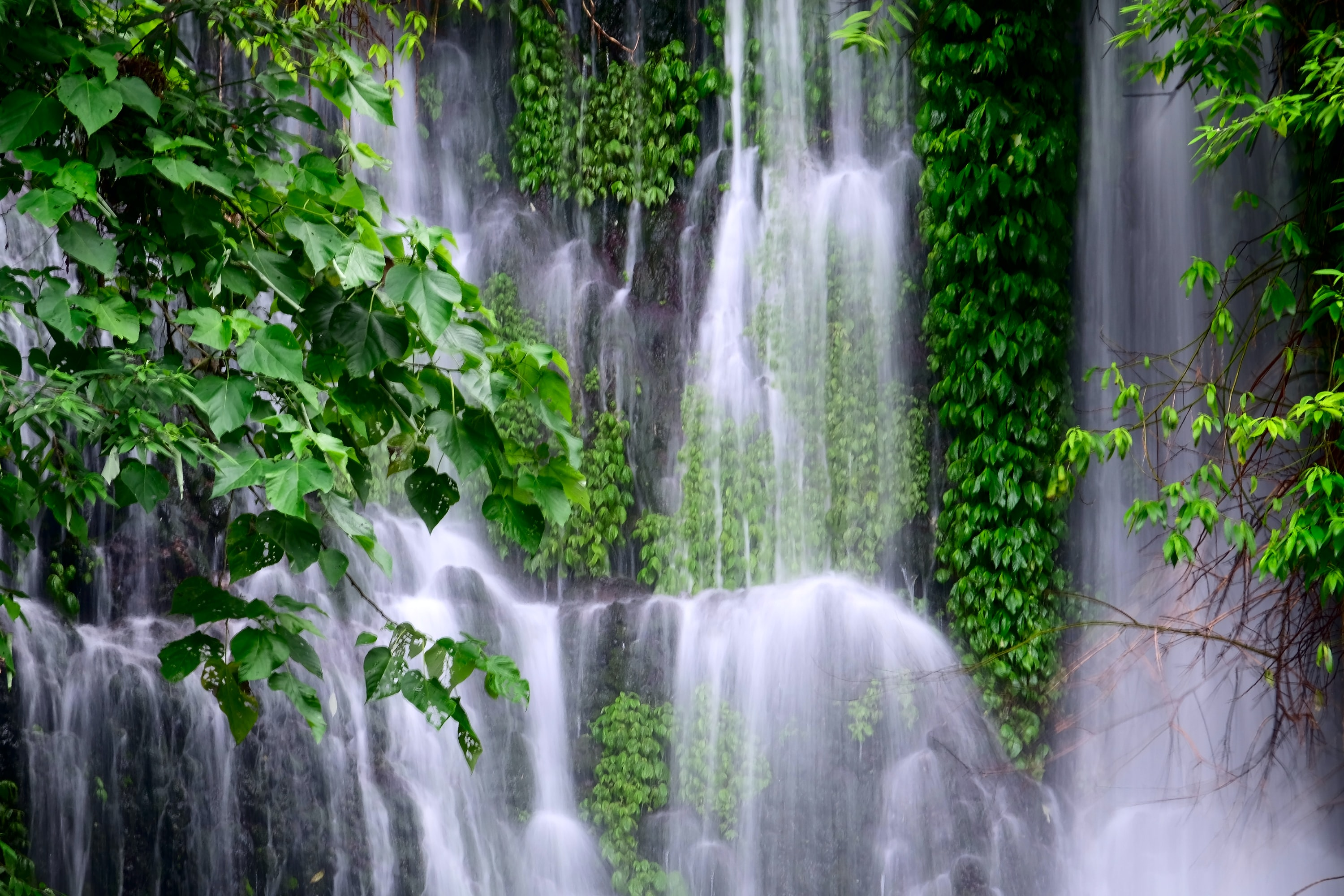waterfall surrounded by green plants taken at daytime