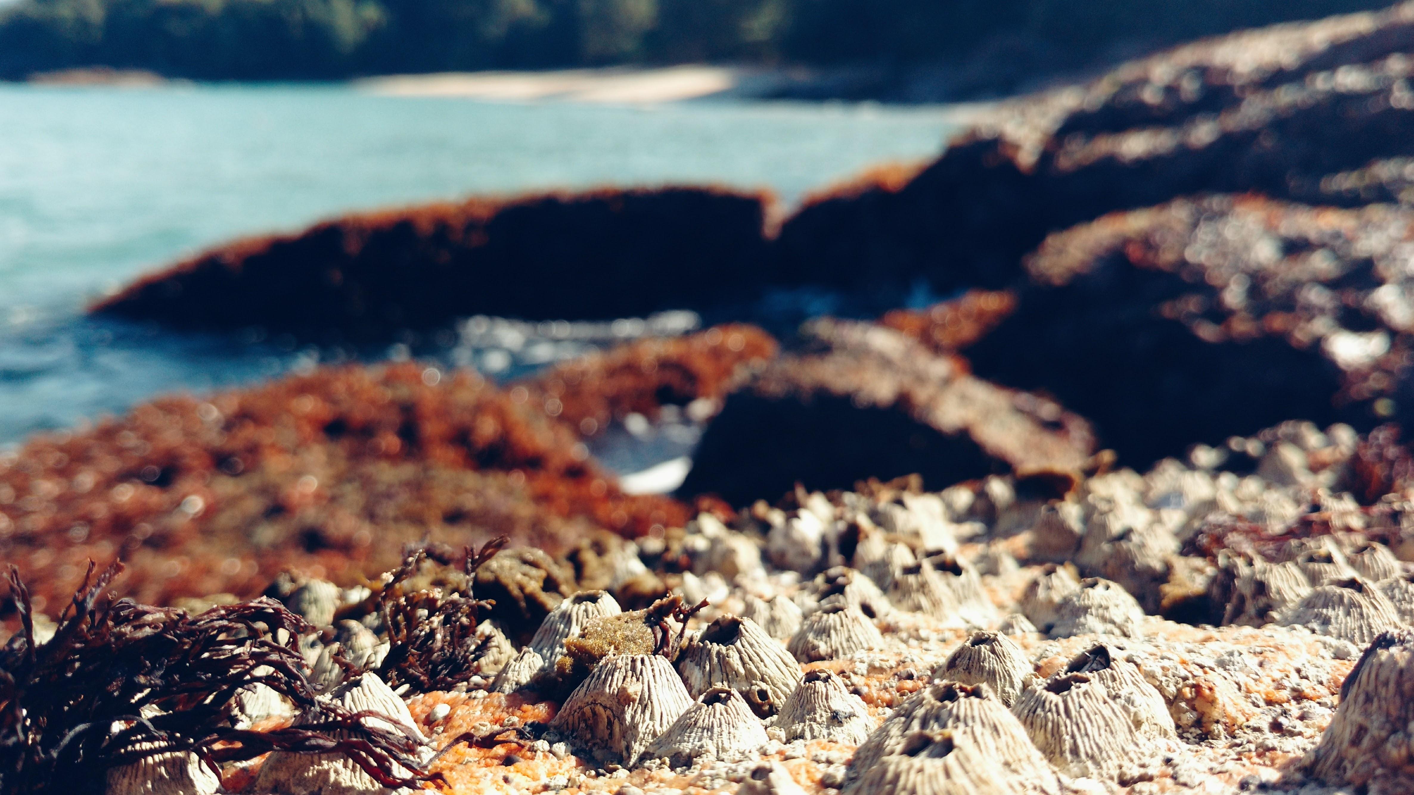 macro photography of seashore during daytime