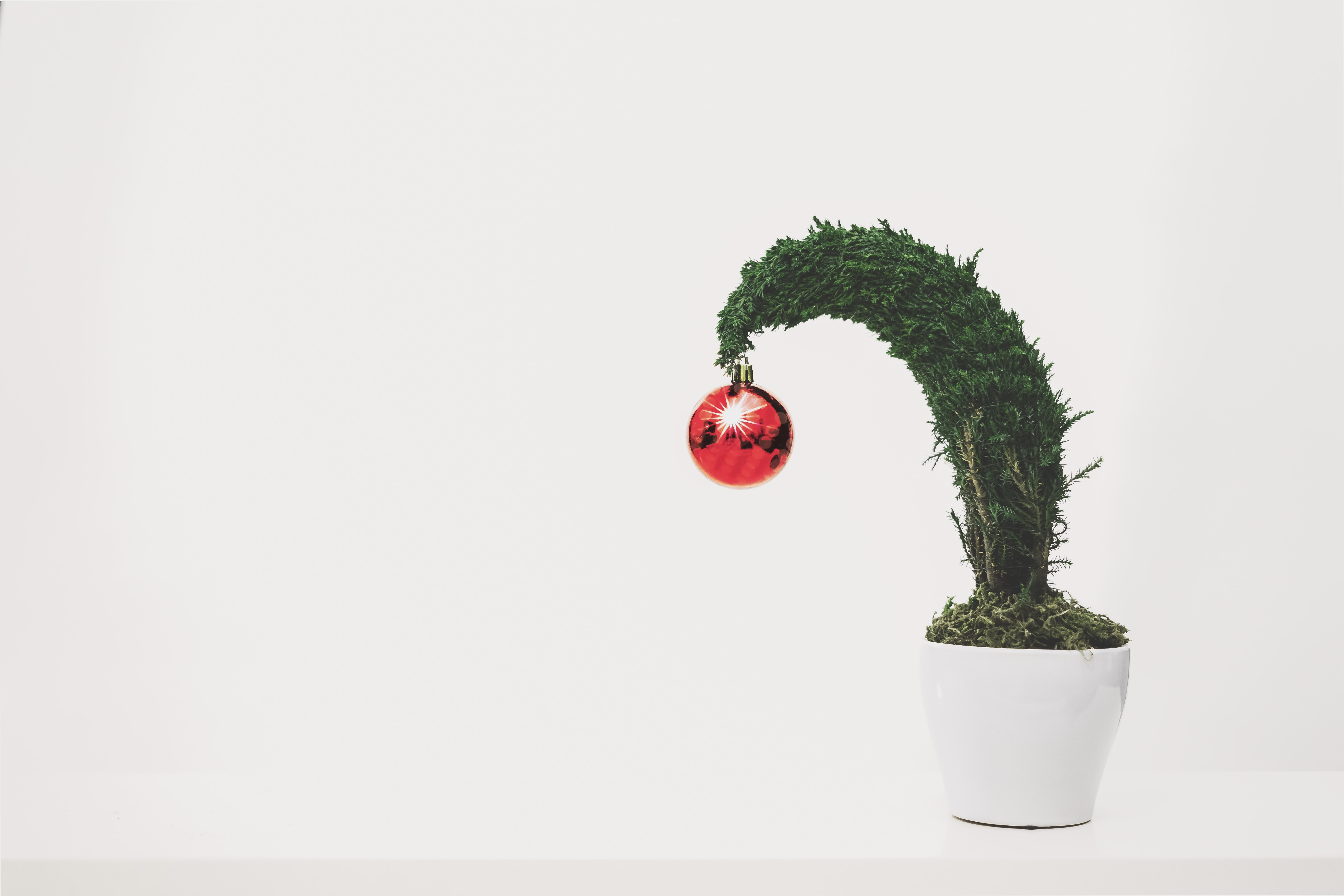 green leafed plant with red bauble