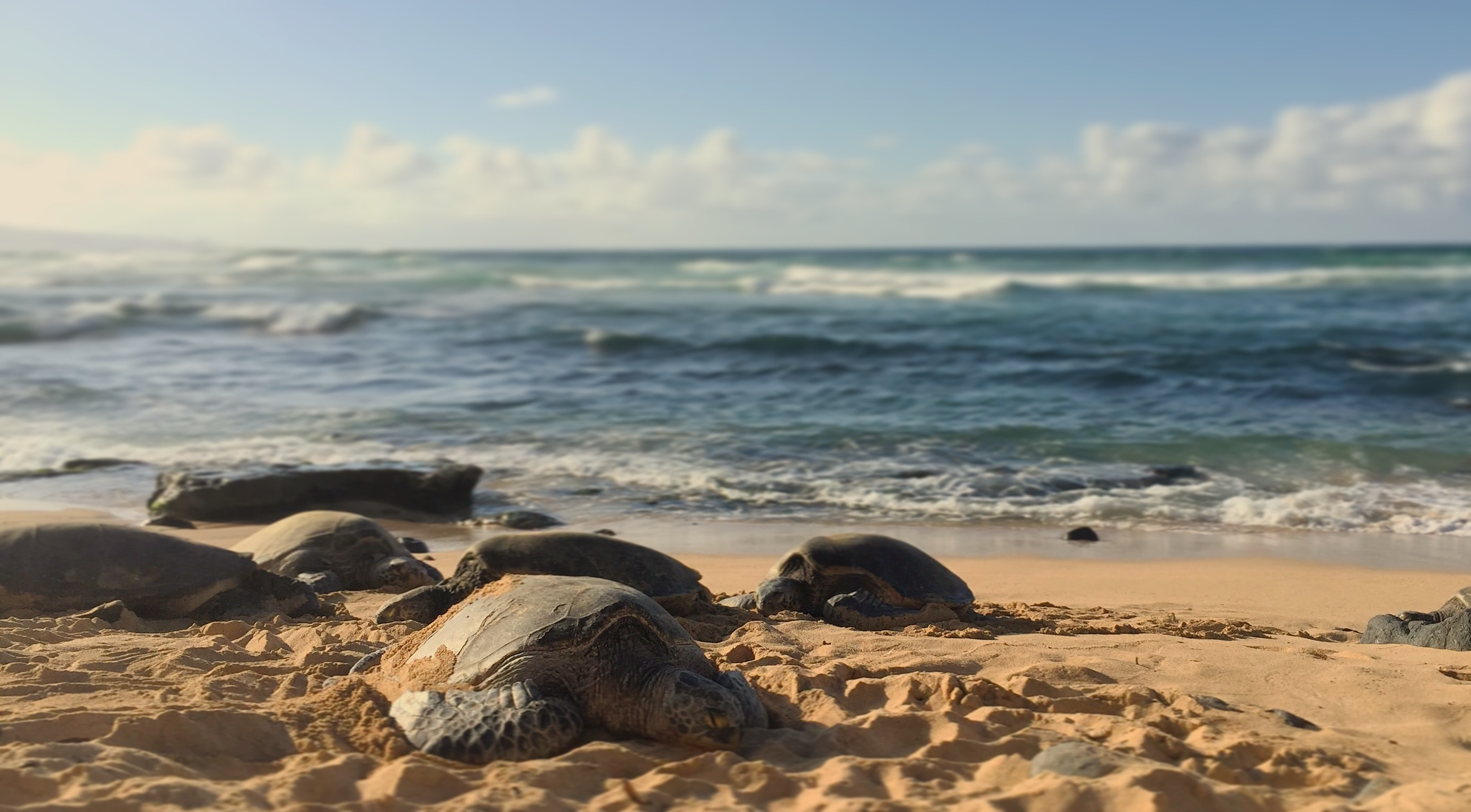 turtle on sand near sea during daytime