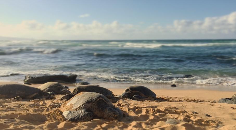 裝GPS的臥底海龜蛋-科學家聯手特效師,抓盜獵犯