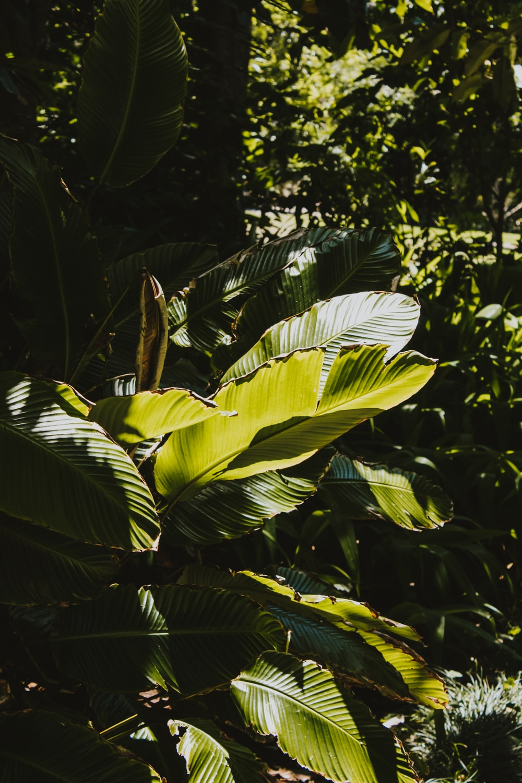 green plant reflect light at daytime