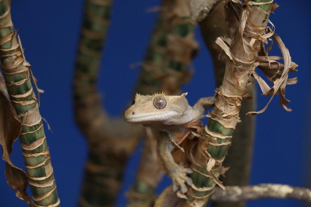 selective focus photo of brown lizard