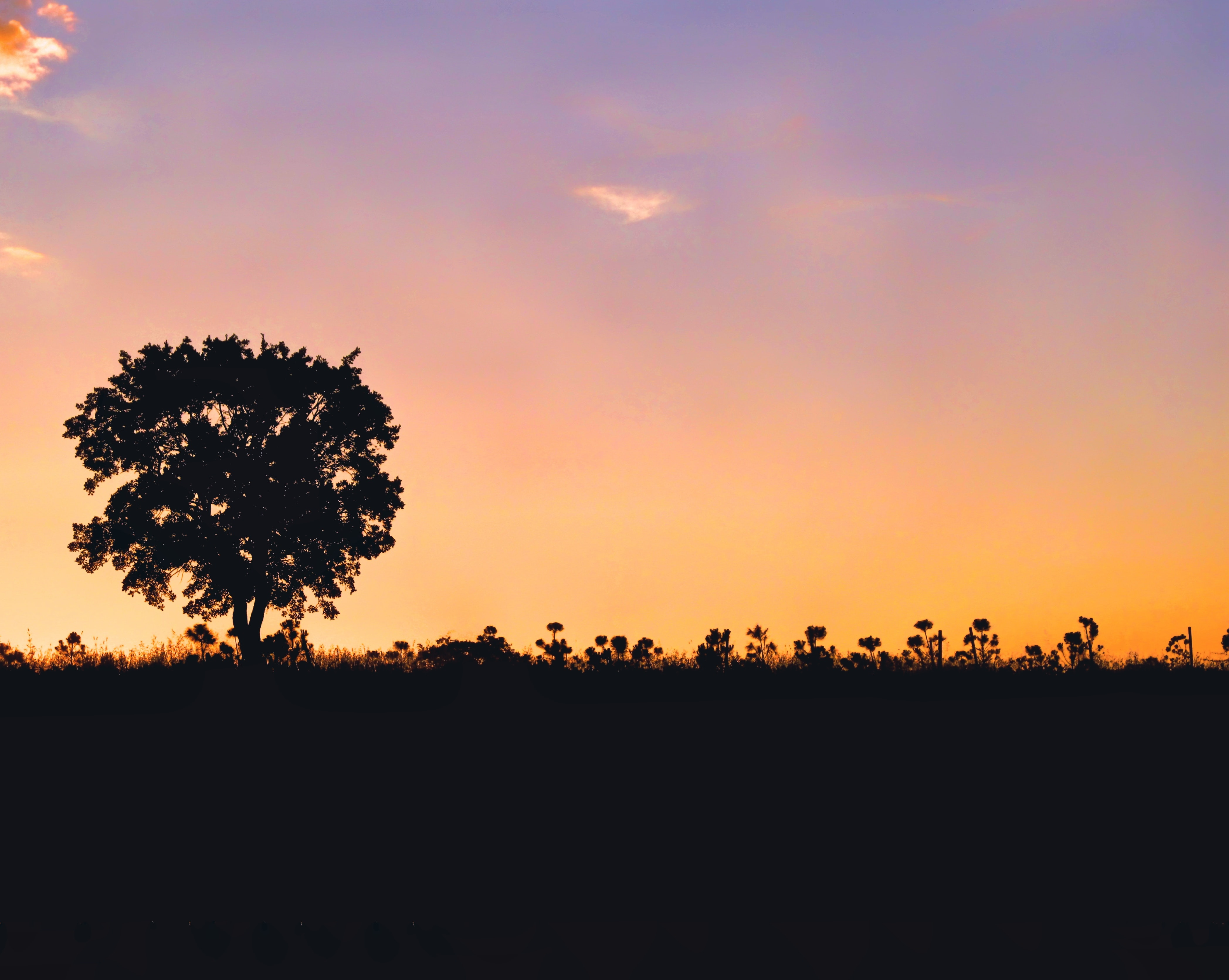 silhouette of tree and flowers during sunset