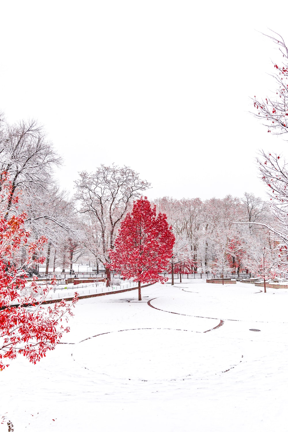 snow-covered park with red trees
