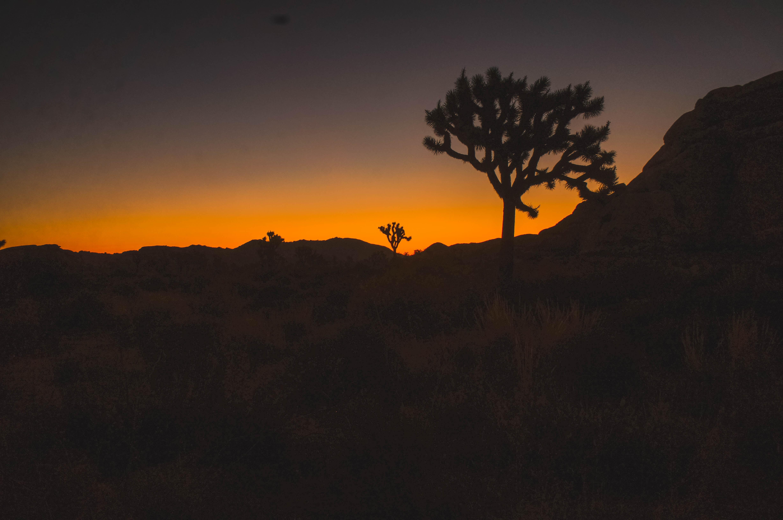 silhouette of open field near tree