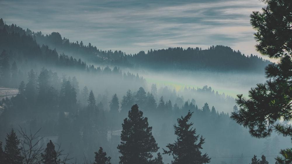 forest under fog