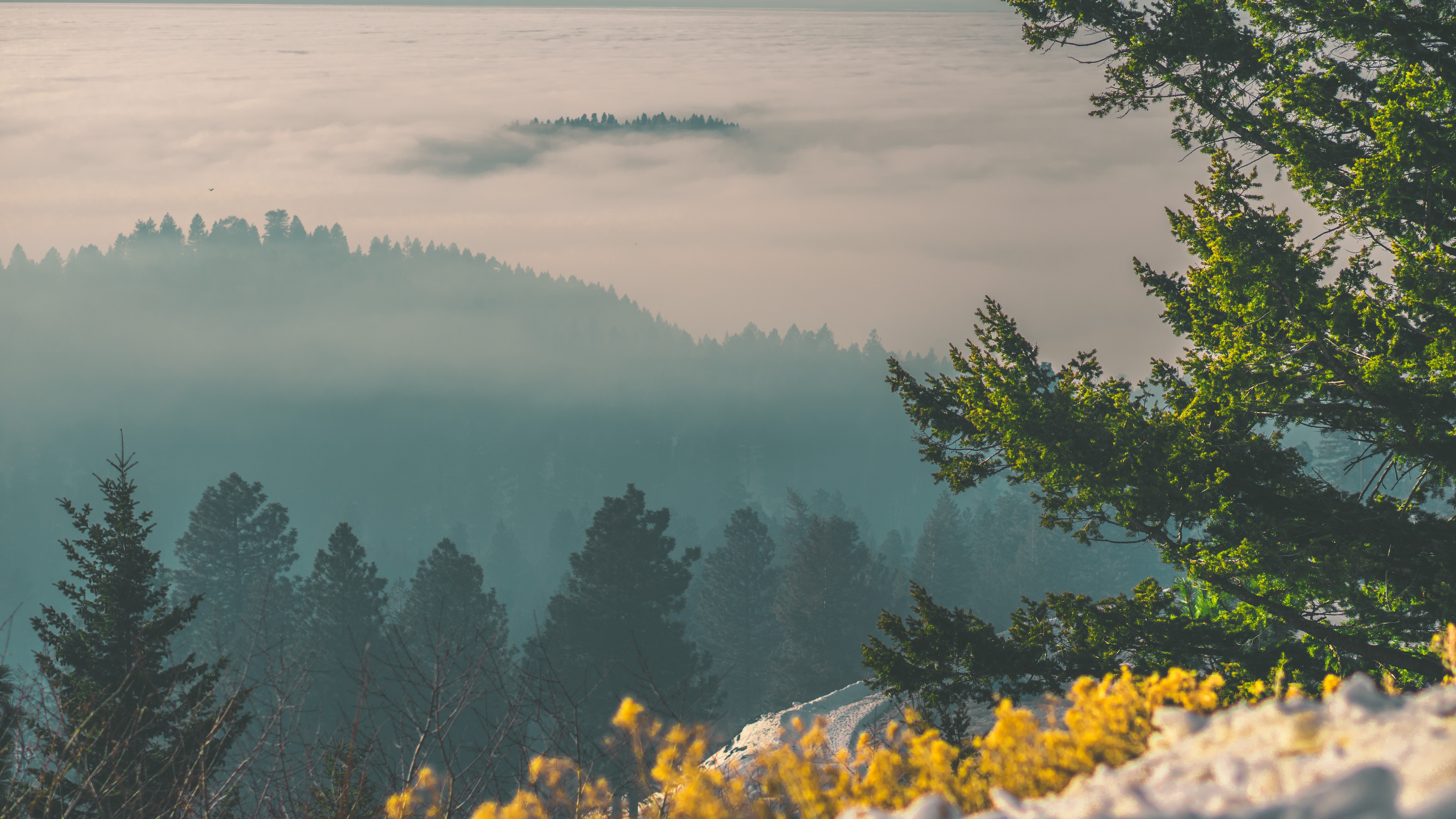 green leaf trees on mountain covered in fog during daytime