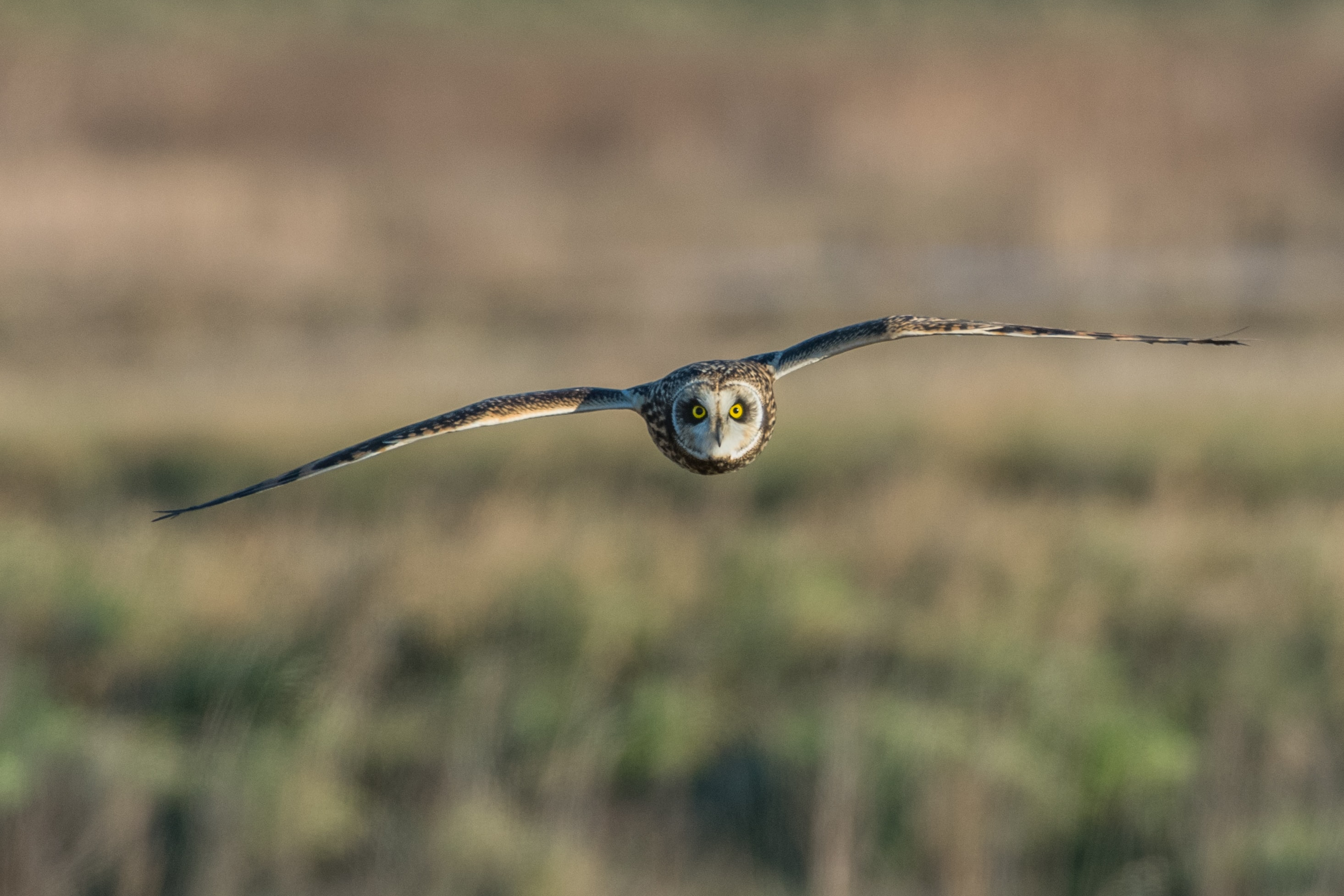 panning photography of owl flying