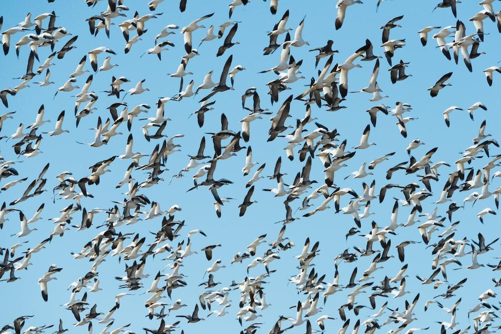 flock of white birds flying