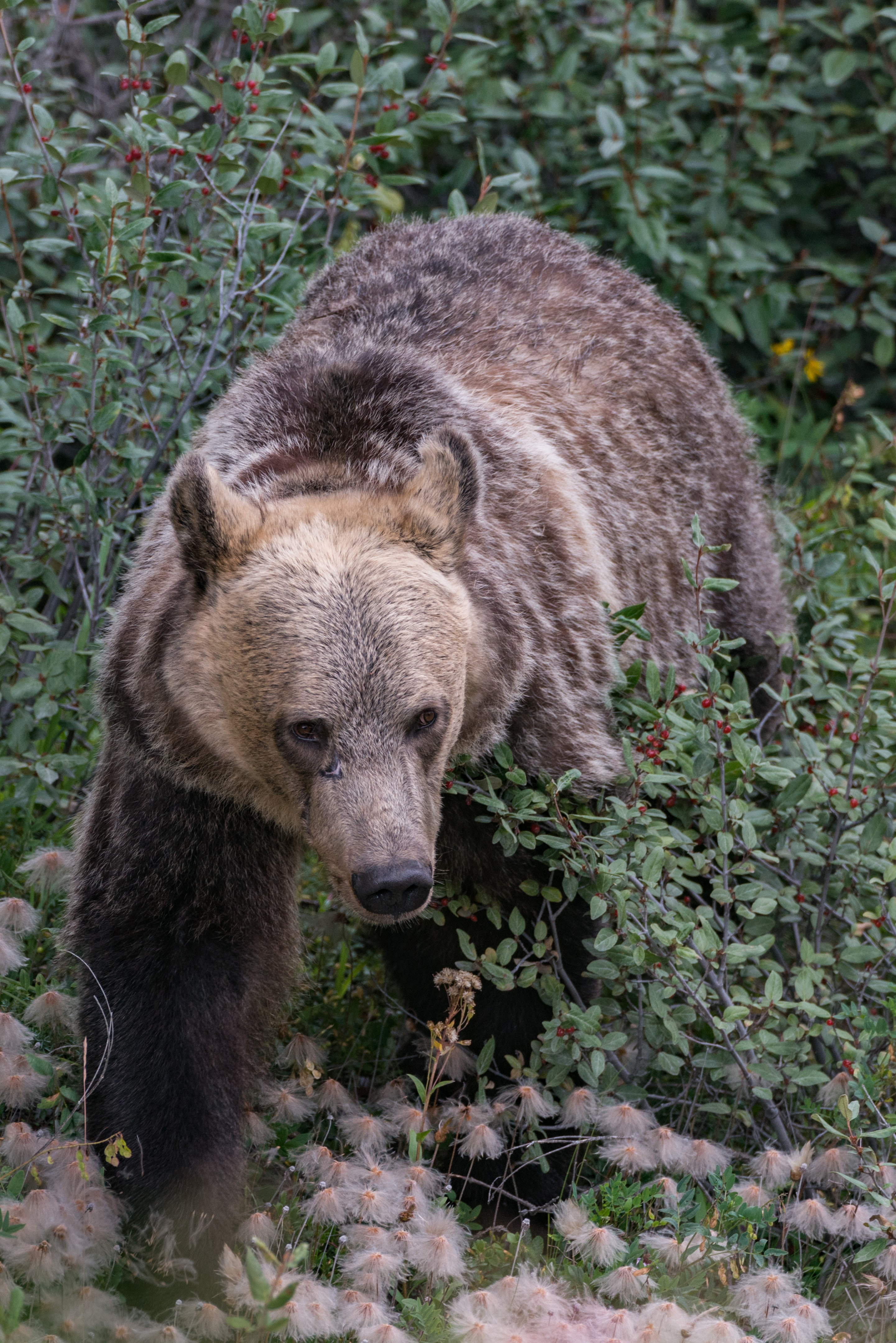 grizzly bear on bush during daytime