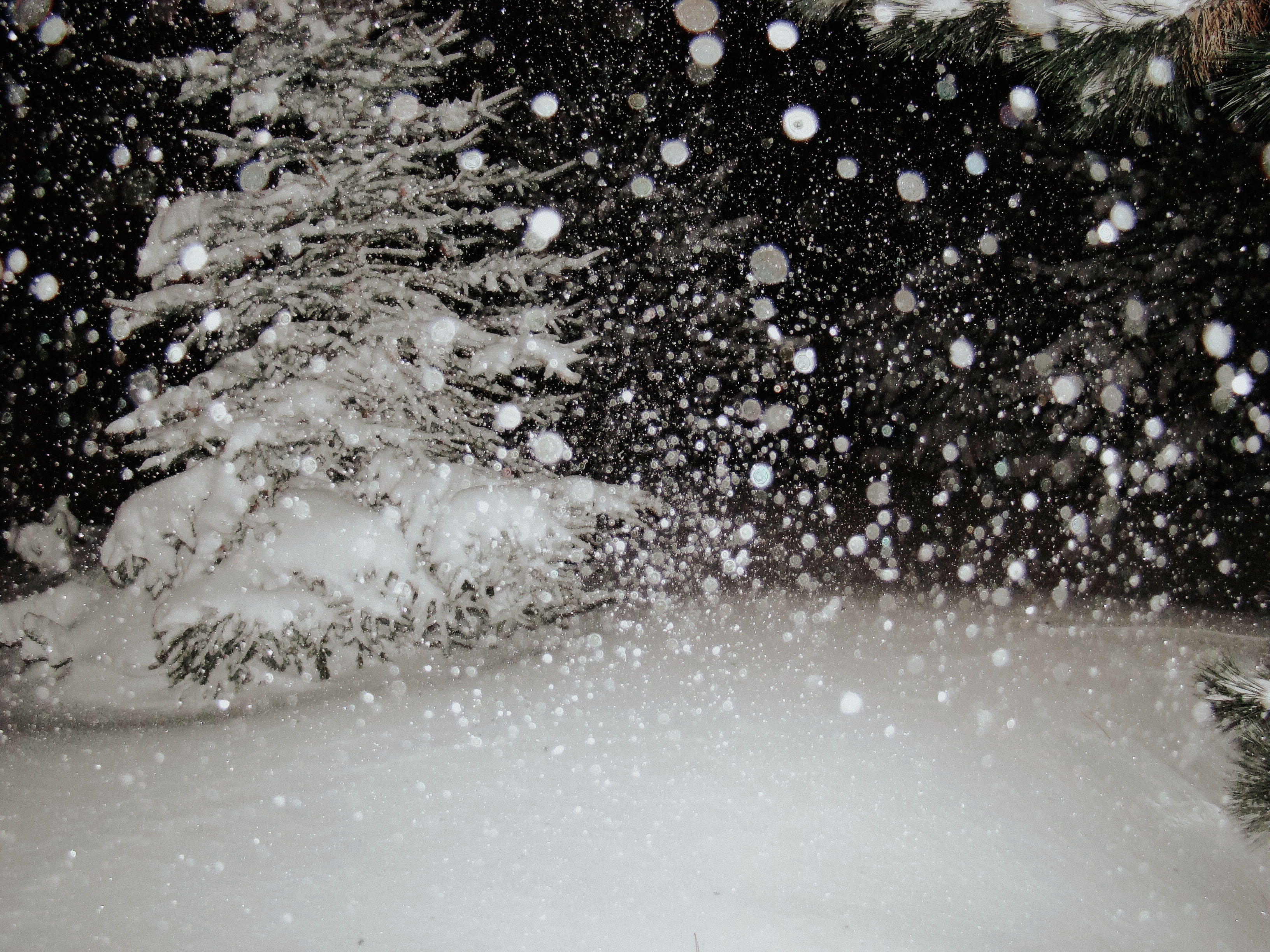 First Flakes stories