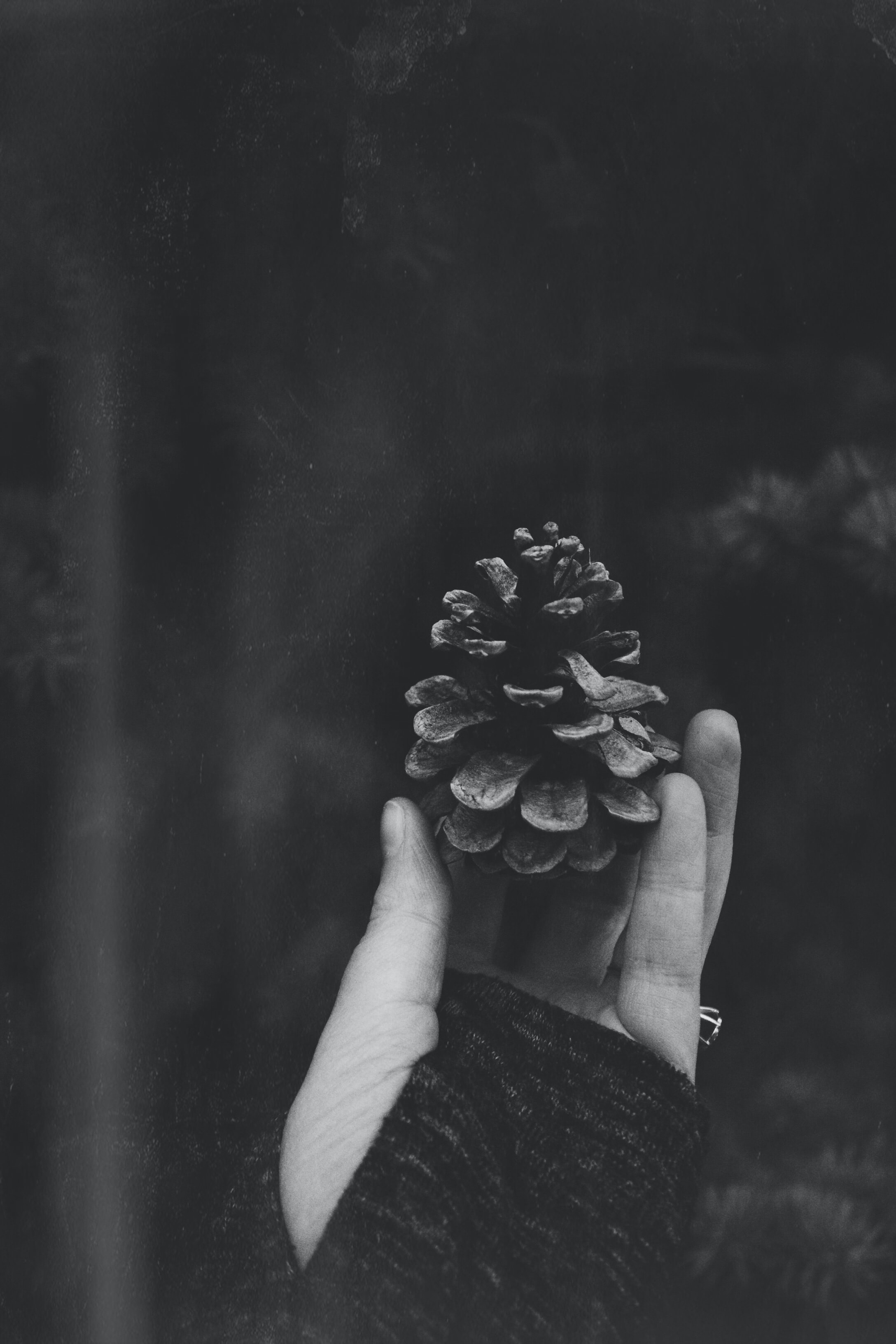 grayscale photo of acorn on person's hand