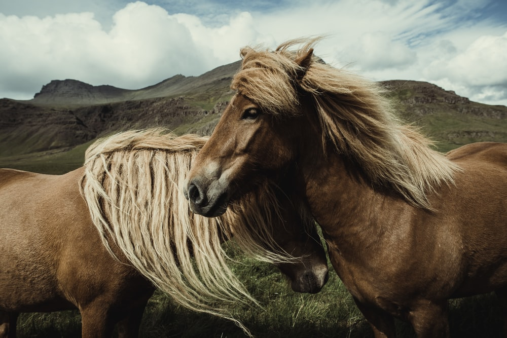 two horses in wilderness