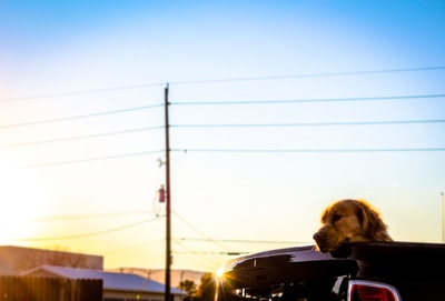 dog on vehicle doggo zoom background