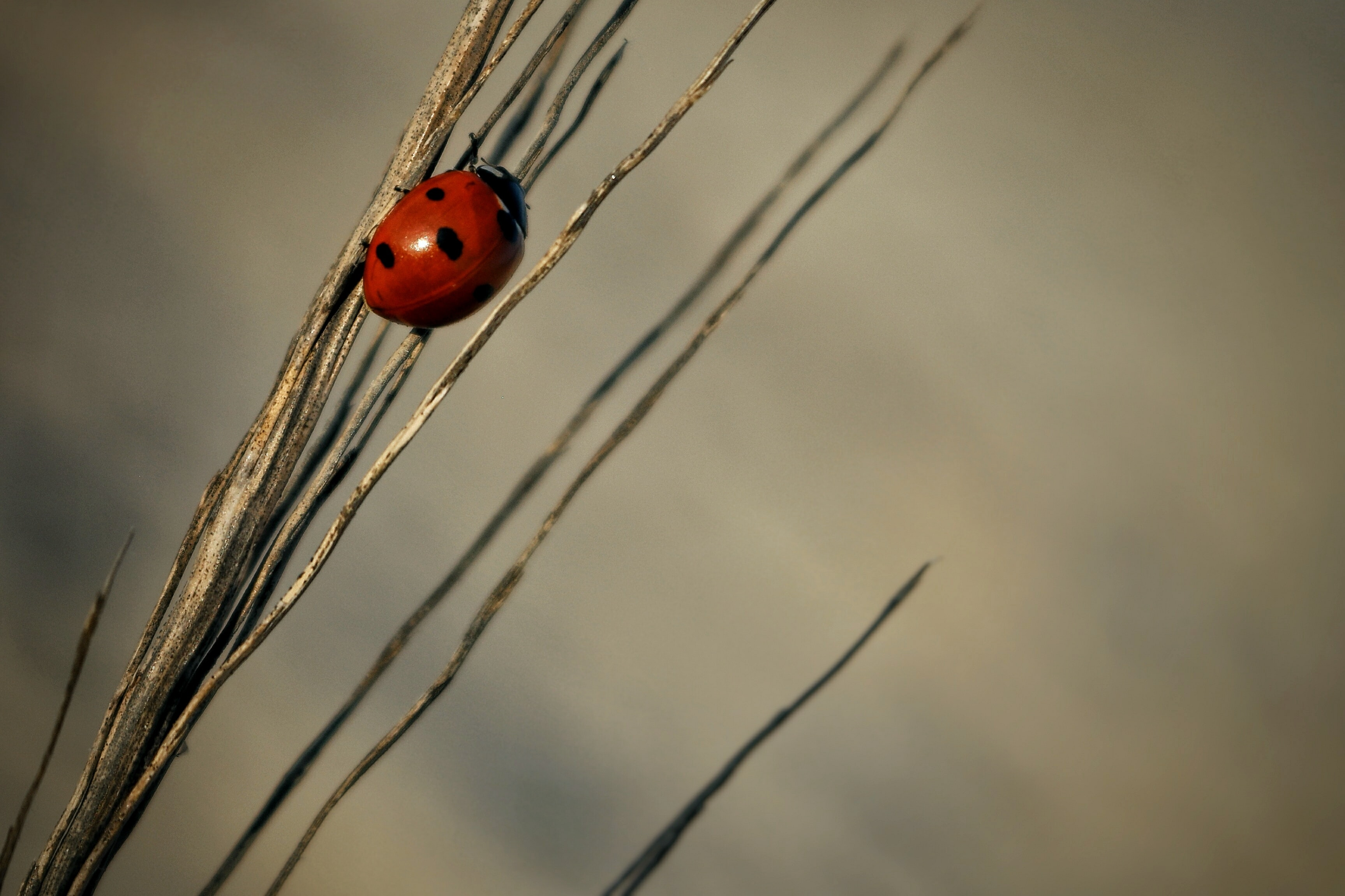 close-up photography of ladybird on grass