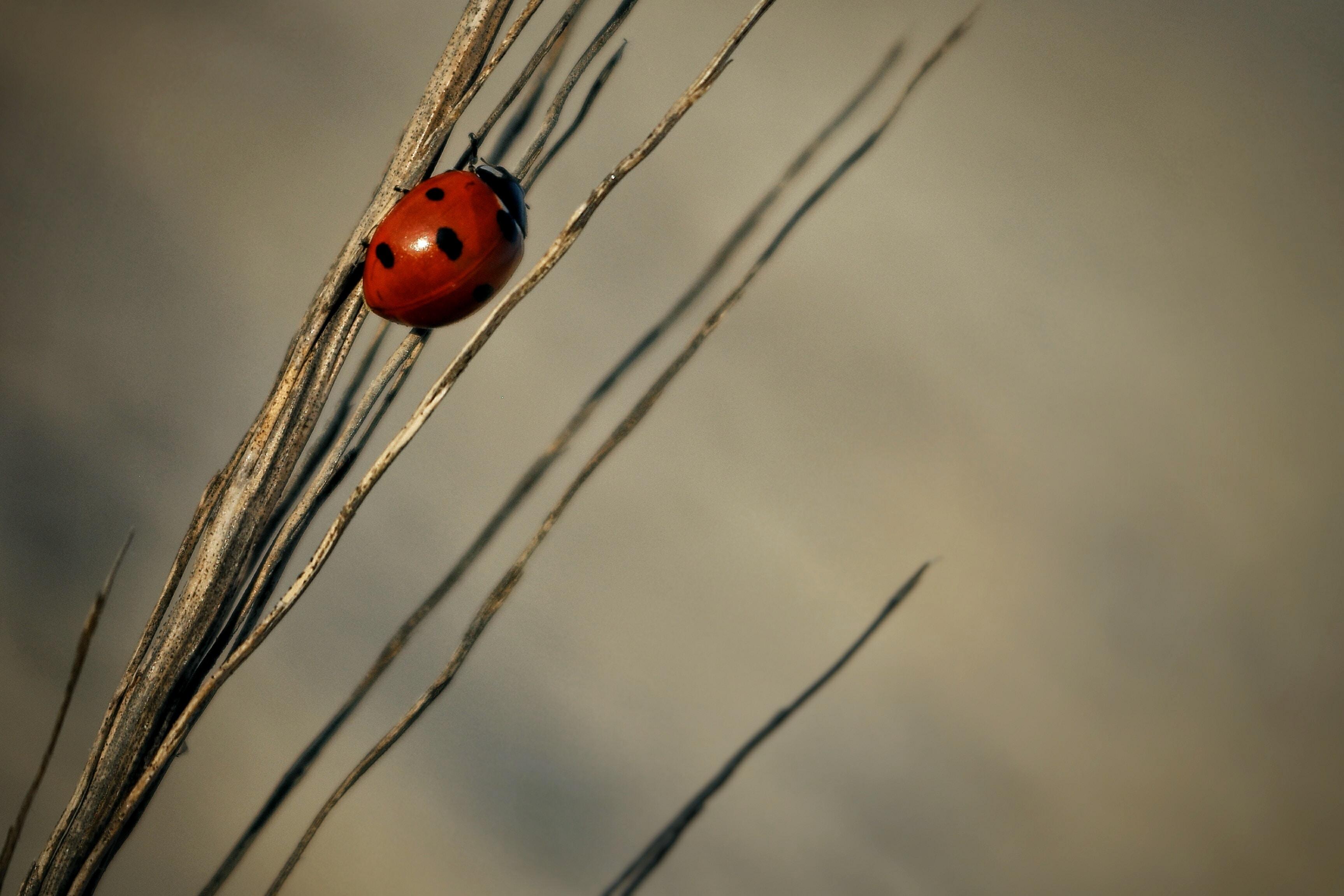 close-up photography of ladybird on grass
