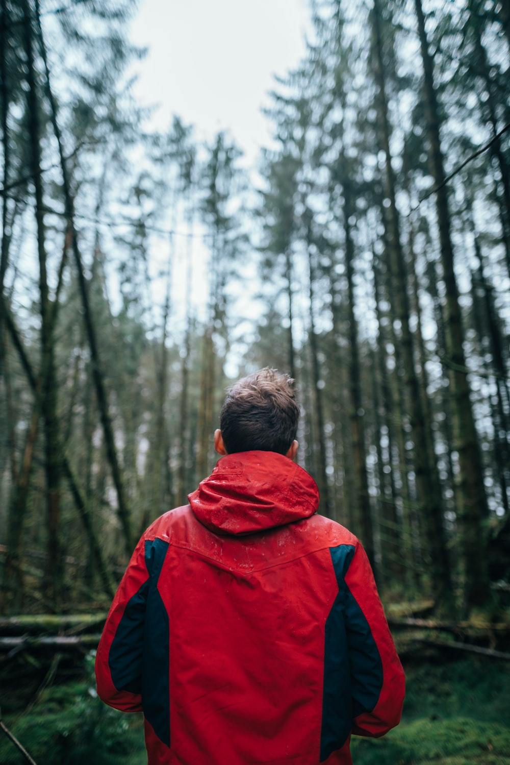 tilt-shift photography of man standing surrounded by trees during daytime