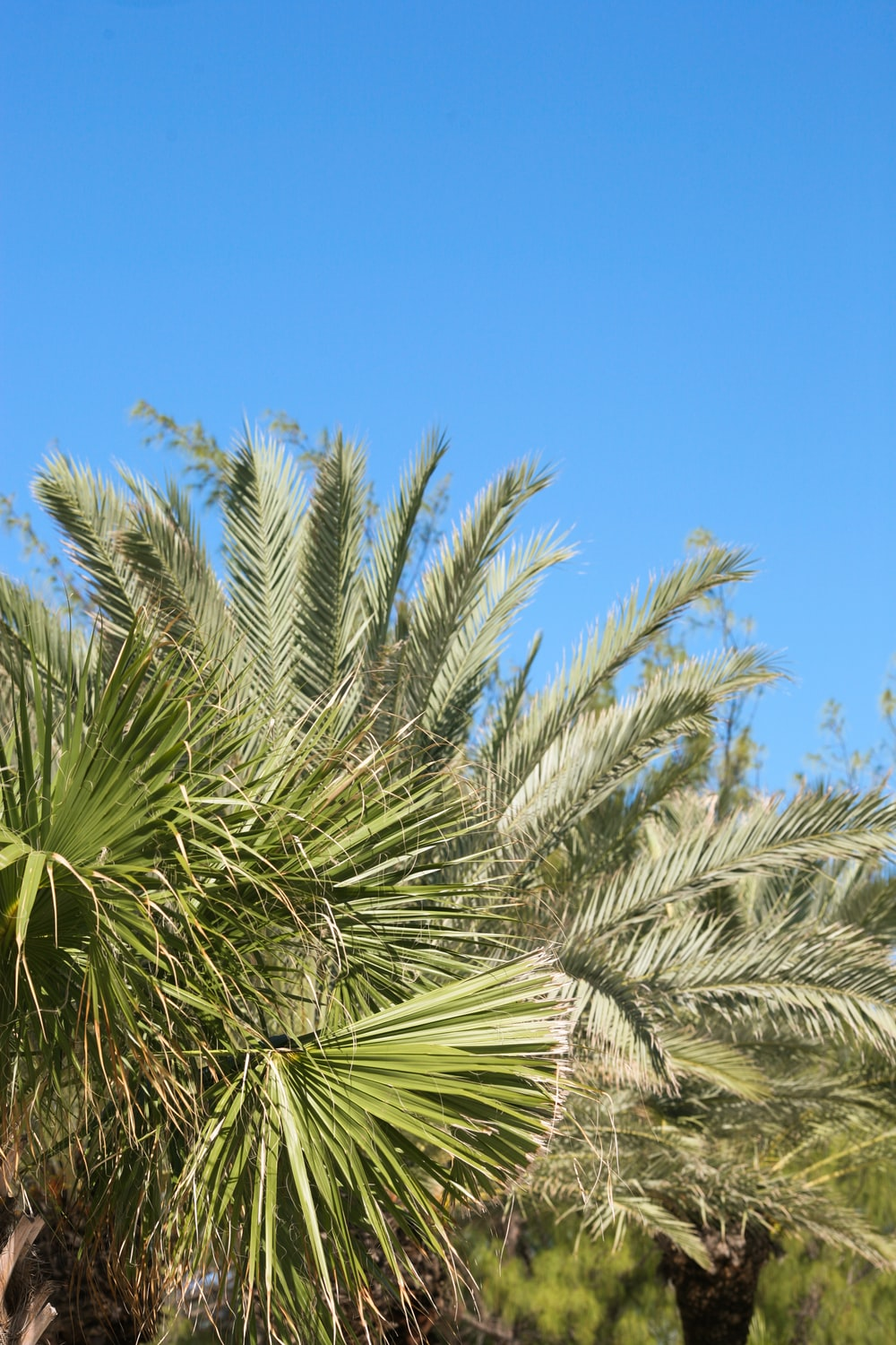 sago palm and fan palm trees
