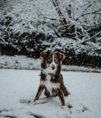 white and tan dog on white snow field