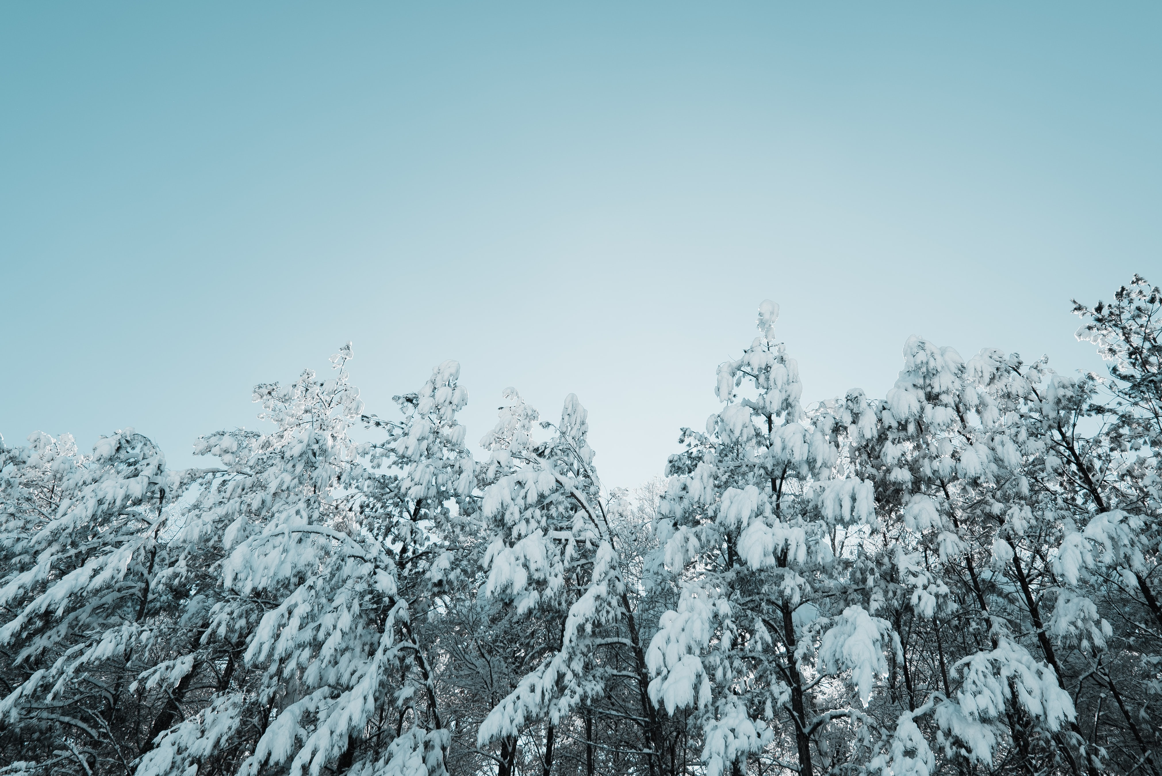 low angle photography of tree with snow