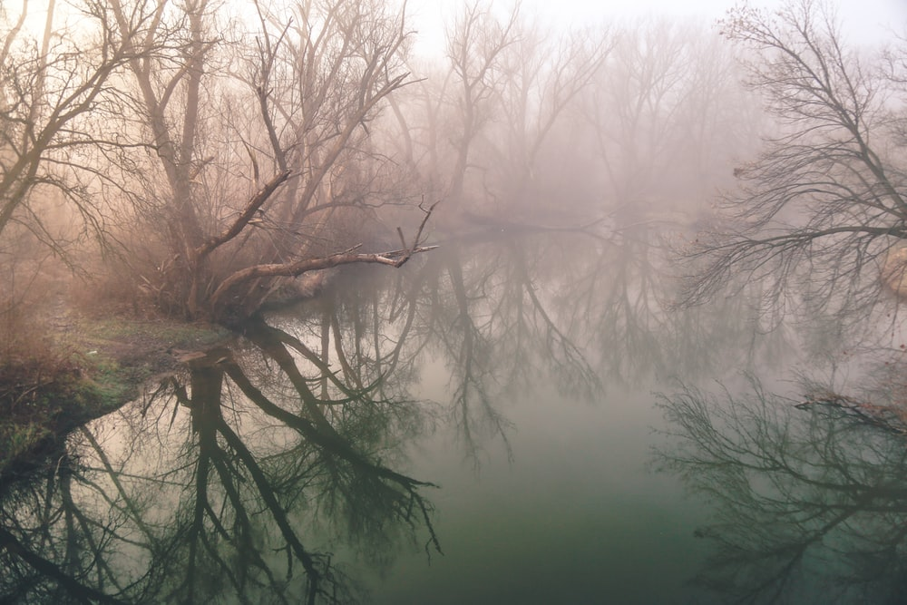 photo of body of water surrounded by leafless trees