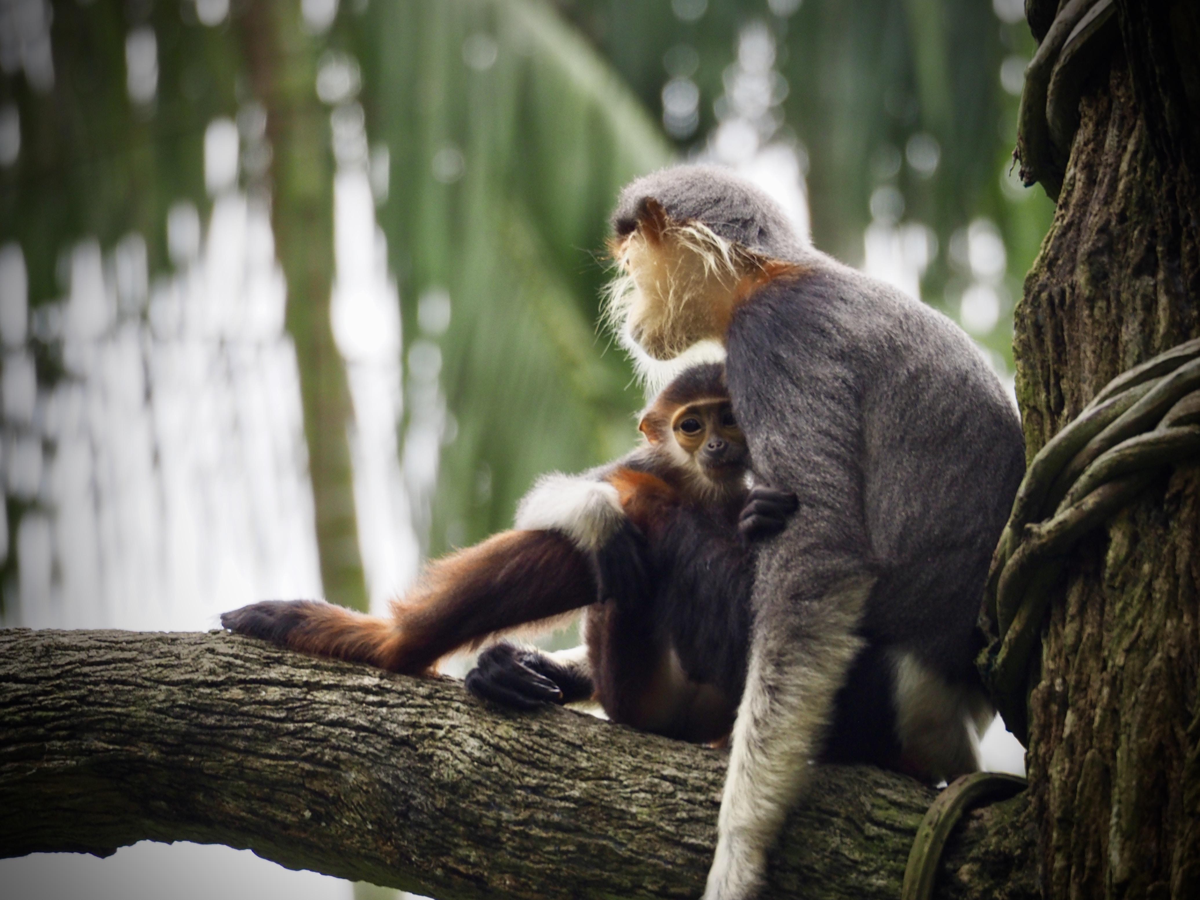 selective photography of gray monkey