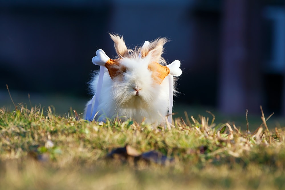 selective focus photography of white guinea pig on grass