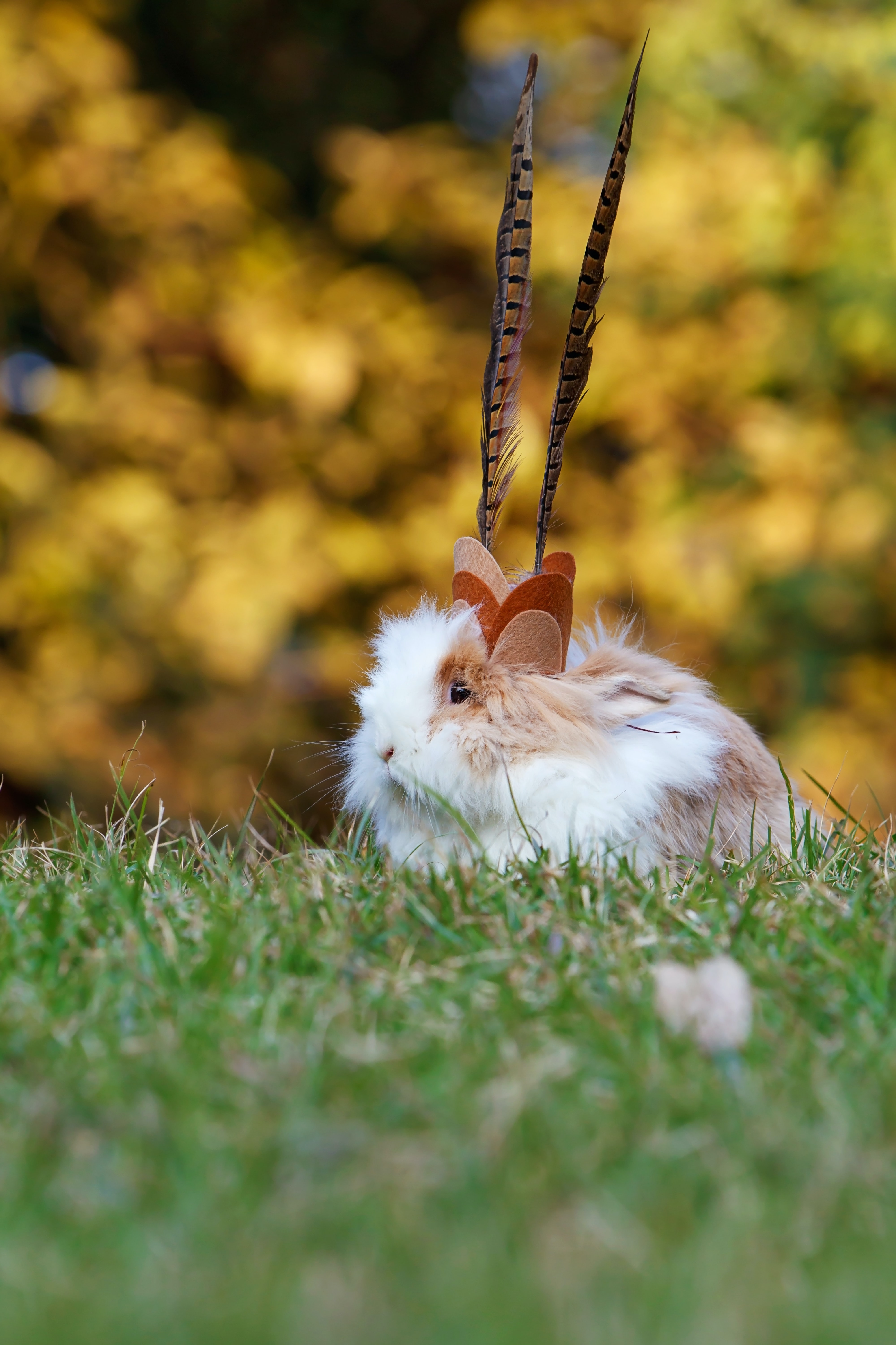 selective focus photo of white and brown rabbit on grass
