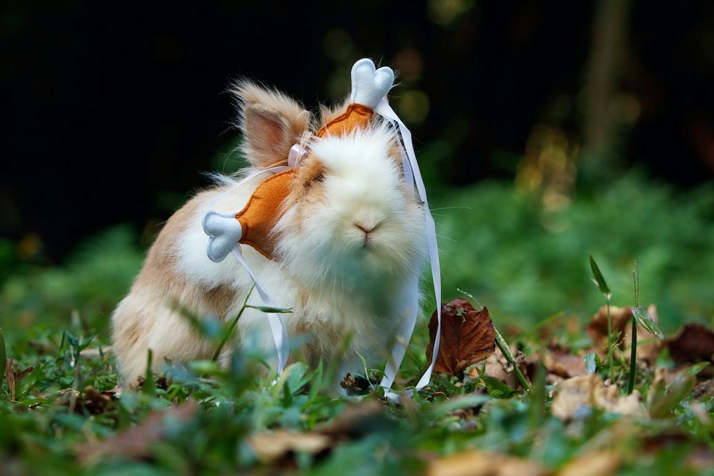 photography of white rabbit