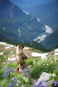 brown squirrel standing on gray stone near flowers during daytime