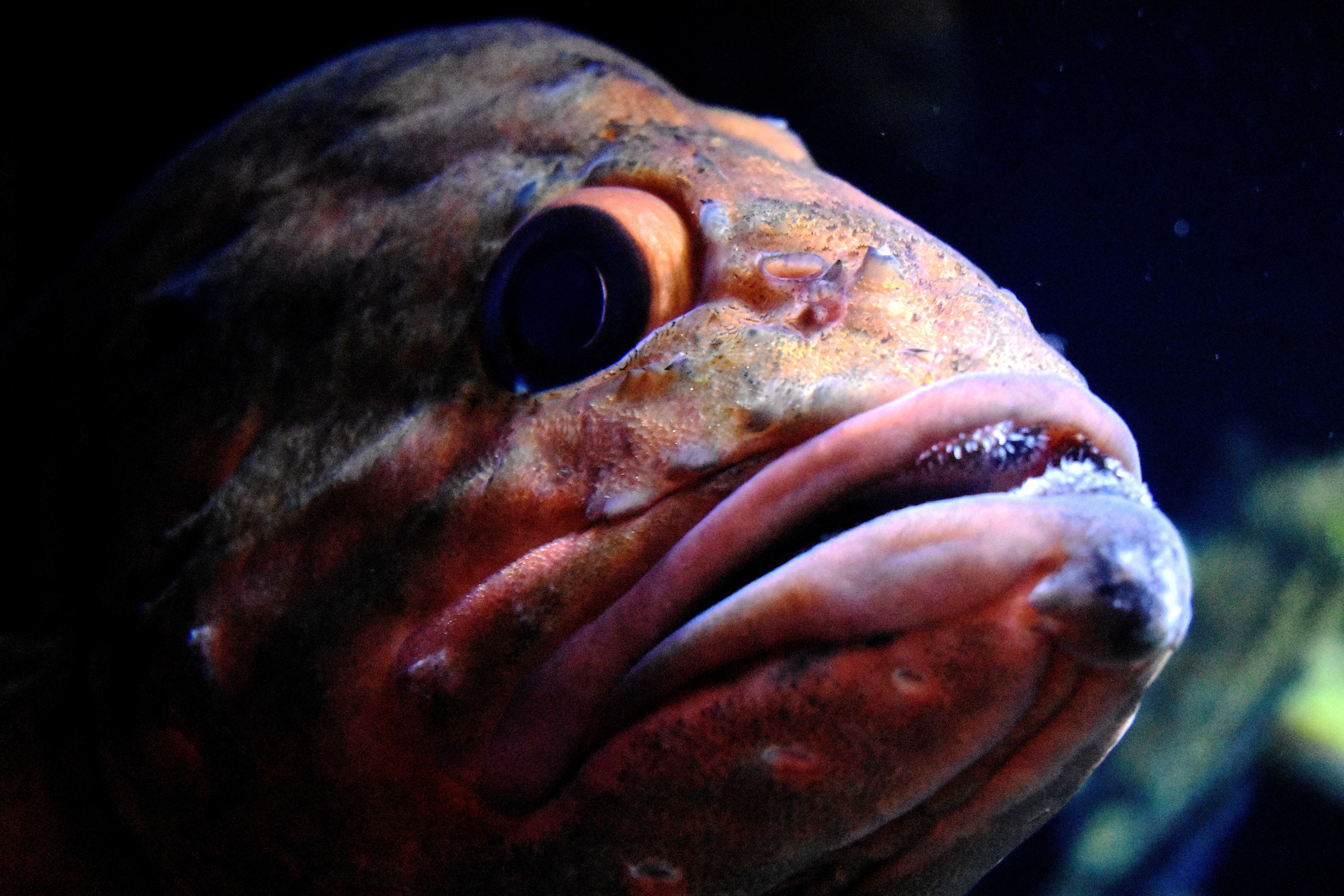 selective focus photography of fish