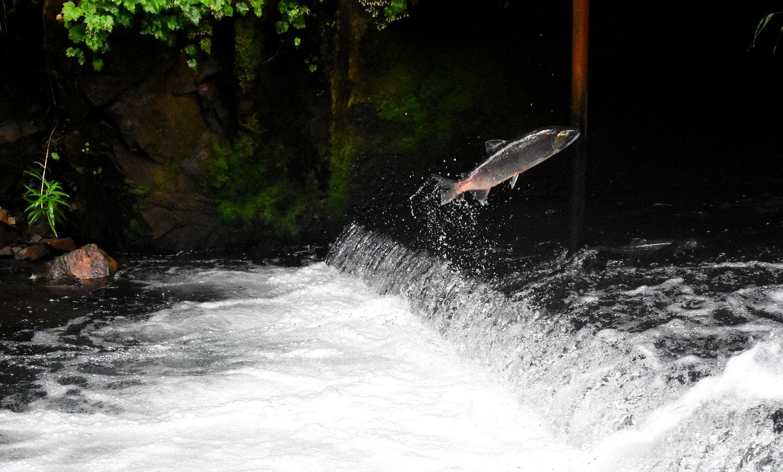 「摸魚」教授曾晴賢-花40年幫魚蓋一條回家路
