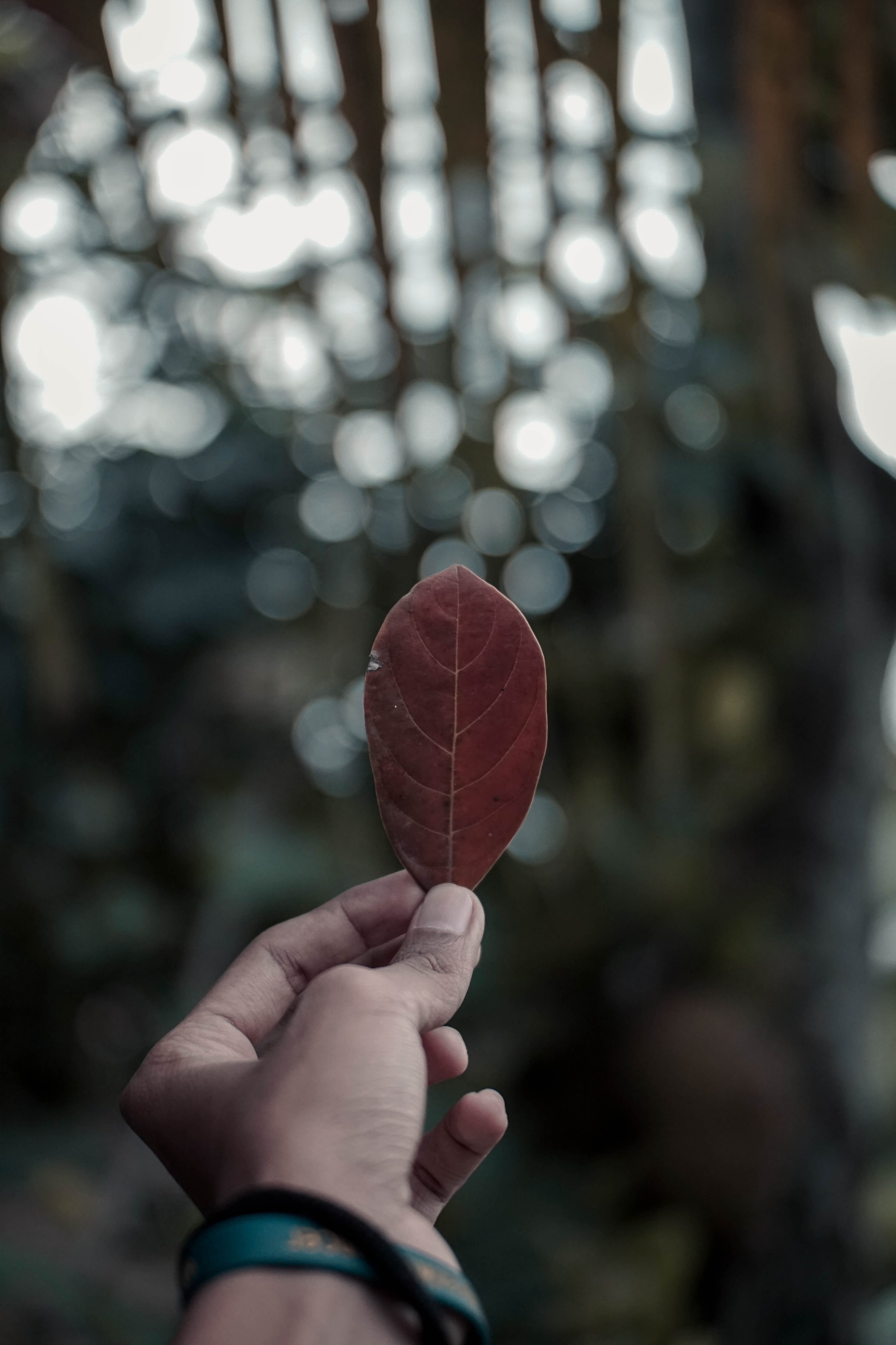 bokeh photography of person holding dried leaf