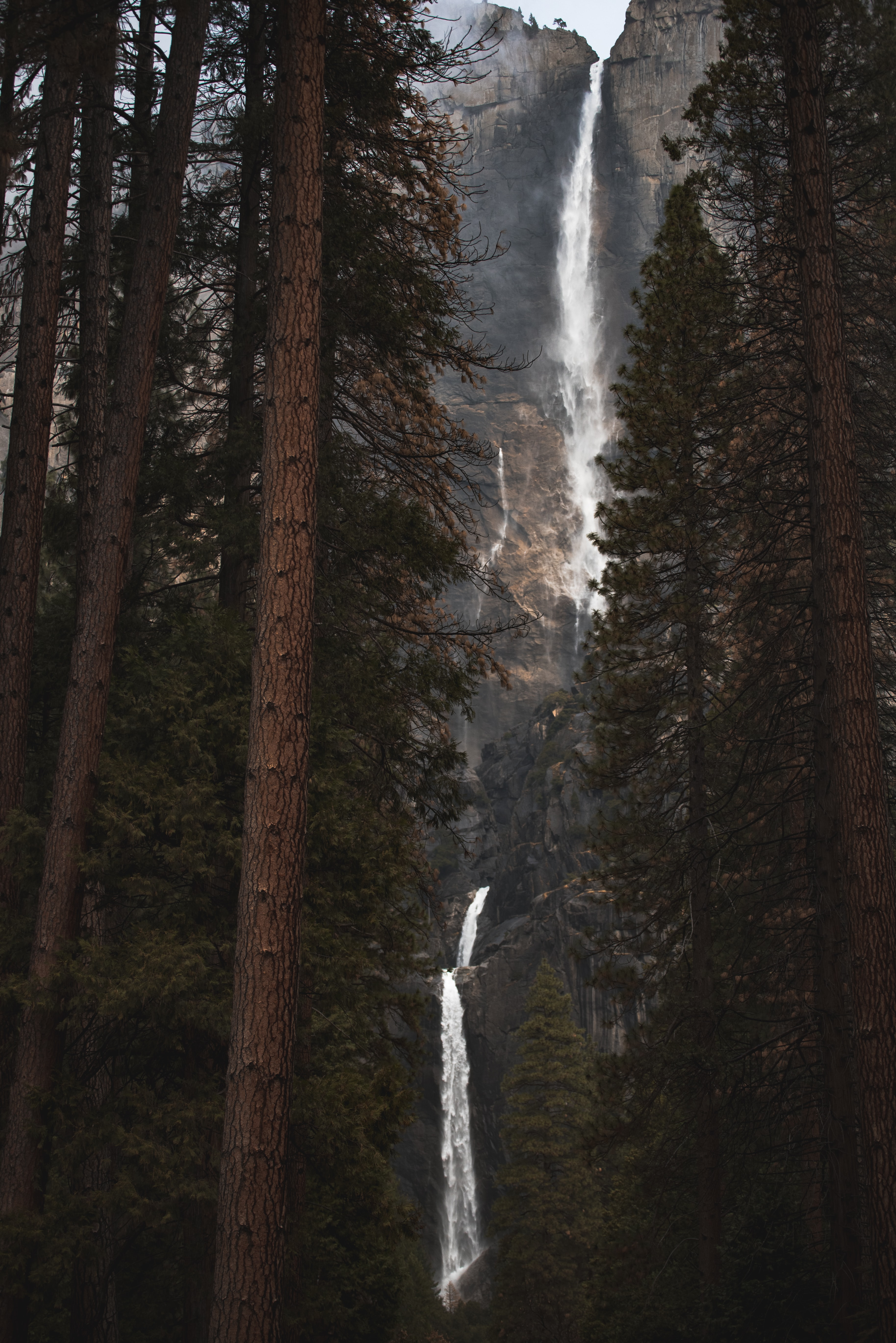 trees overlooking Angel Falls Venezuela at daytime