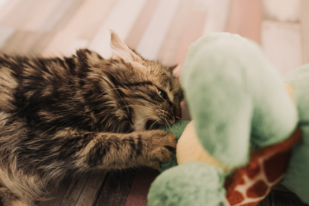 brown and black tabby cat playing with plush toy