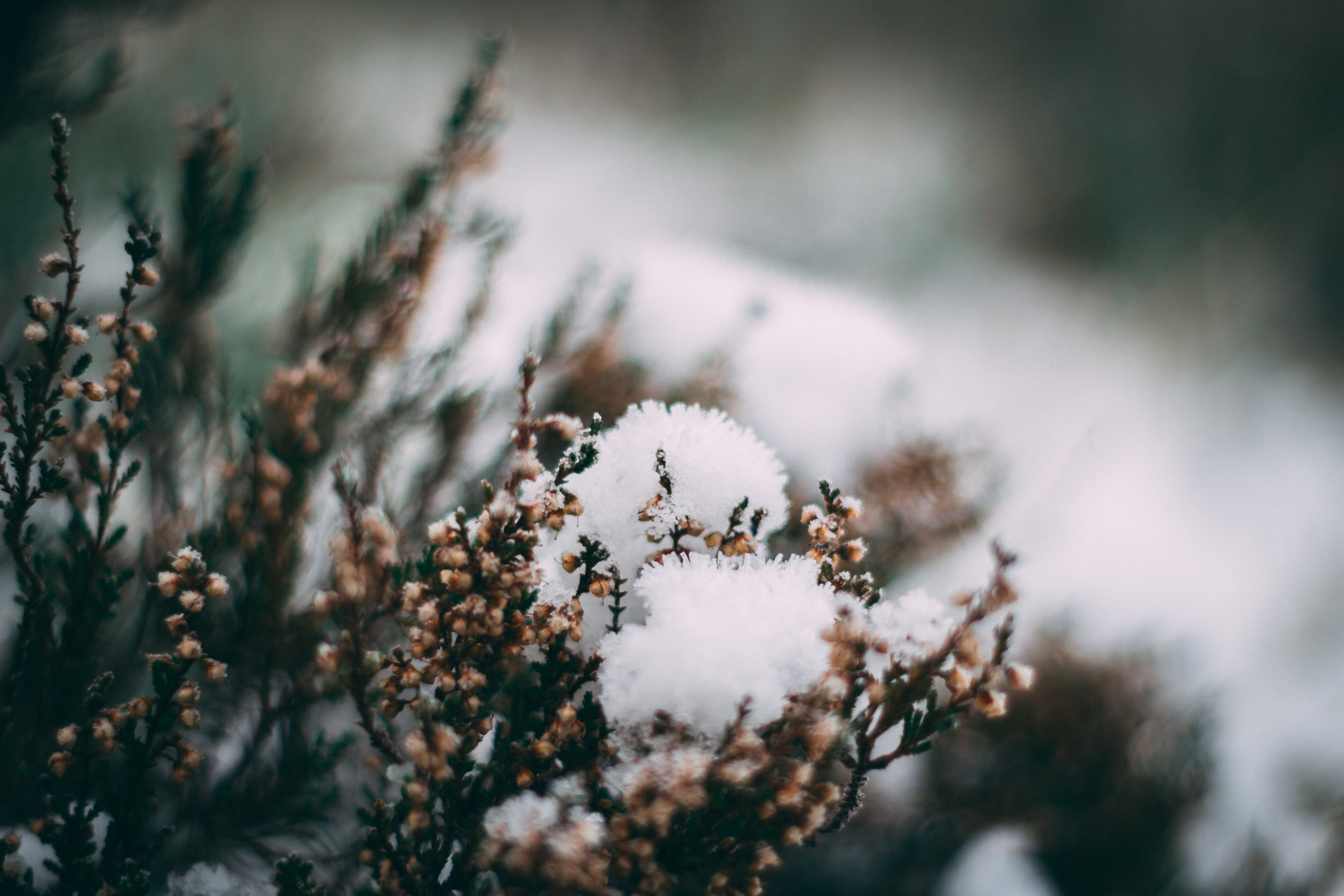 close up photo of pine trees with snow