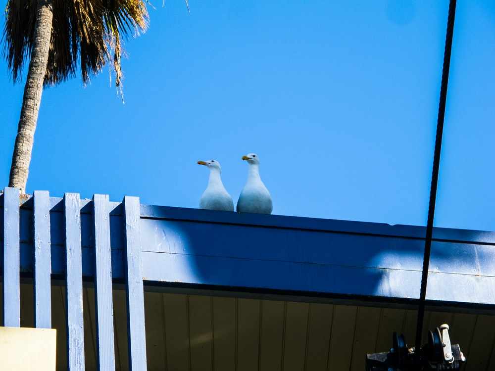 two seagulls on top of blue surface