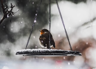 bird on scale