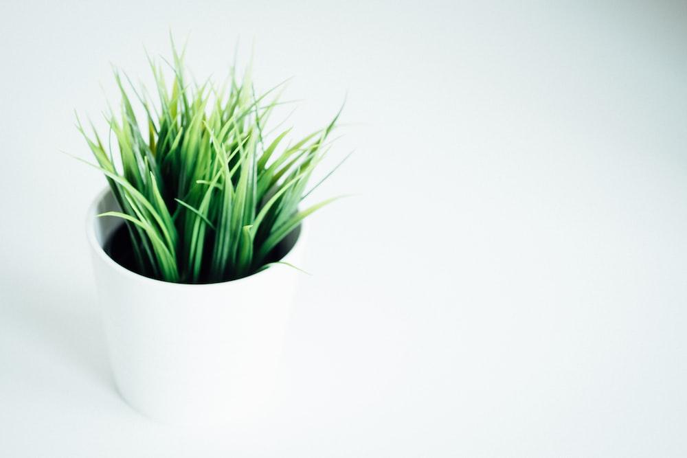 green leafed indoor plant on white vase