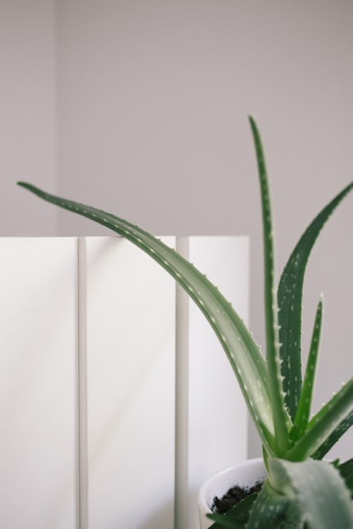 What Do You Need To Know About The Aloe Propolis Crème?